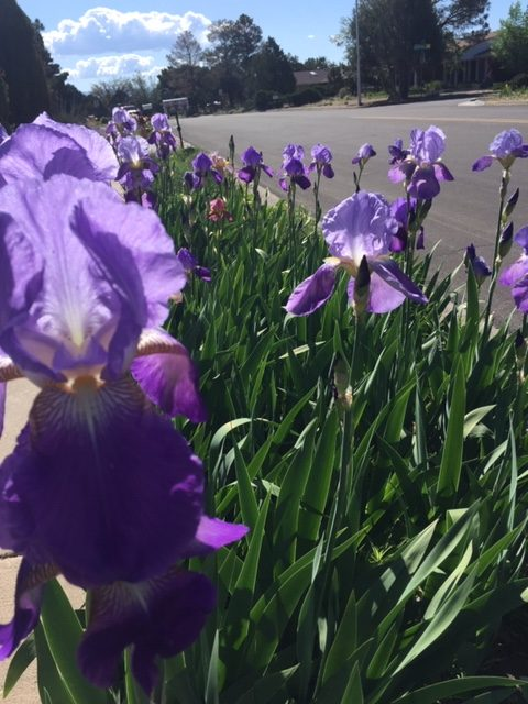 empress woman purple irises walk in nature