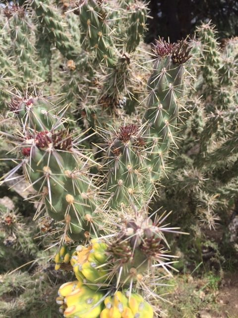 desert cactus walk in nature