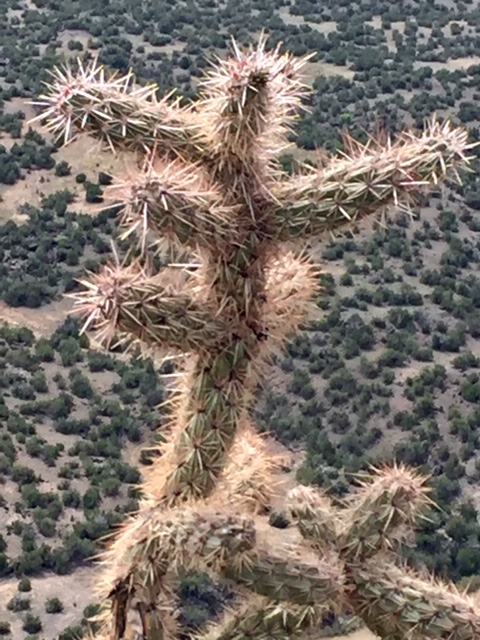 cholla plant friend walk in nature